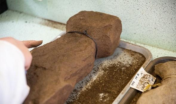 العثور على منحوتة تعود إلى أكثر مِن 13 ألف عام
